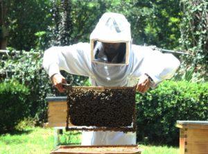 Extinción de abejas