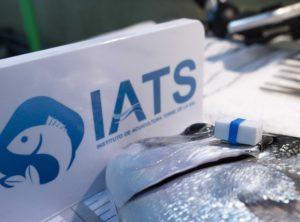 Monitoreo peces