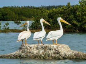 Rescate manglares